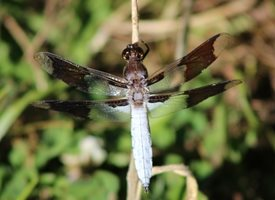 More Dragonfly magic