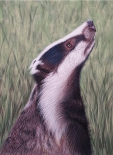 `Stop the Cull`