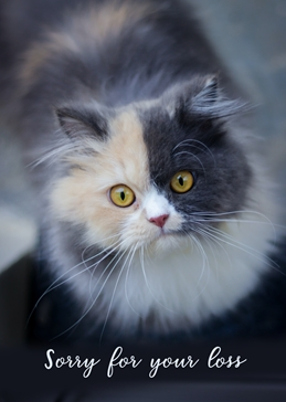 Sorry For Your Loss Cat Image