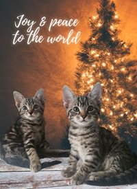 Joy and peace to the world