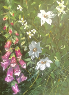 Foxgloves and climbers