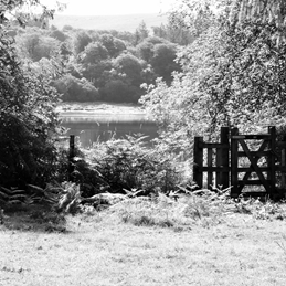 The view beyond the gate