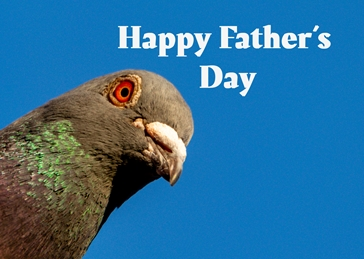 Pigeon Father's Day
