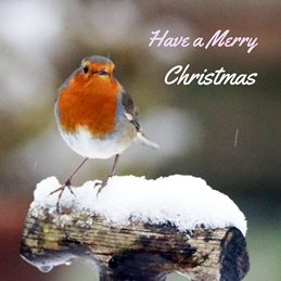 Front Facing Robin Merry Christmas