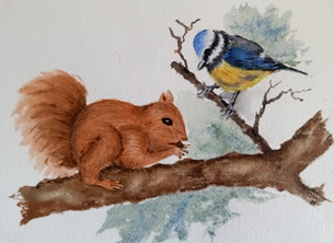 Squirrel and blue tit