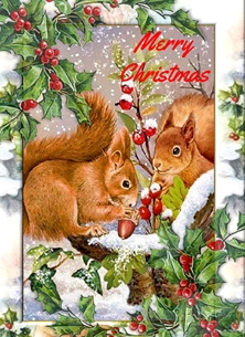 Red Squirrels at Christmas