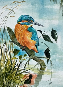 Kingfisher along the towpath