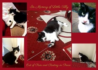 In Memory of a Lost Pet - Example Design Your Own