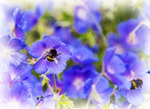 Busy Bees on Blue
