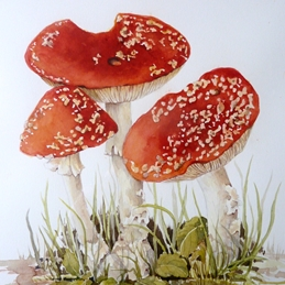 Toadstool, Fly Agaric
