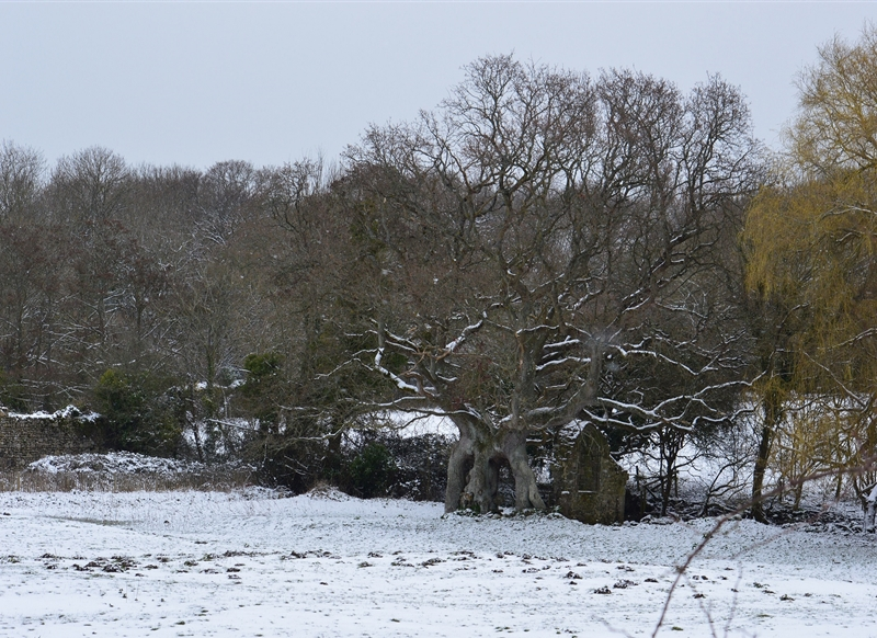 Wight Life Images Ruins in snow  personalised online greeting card