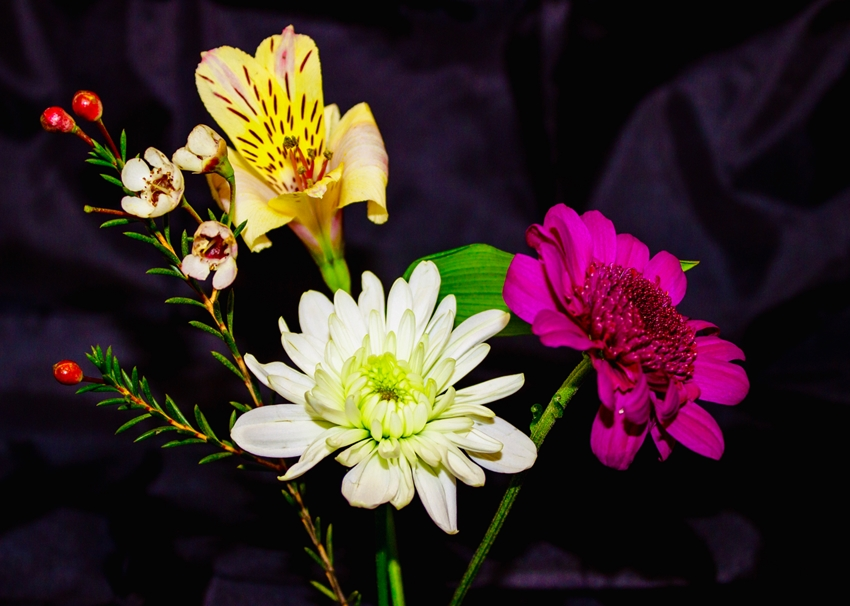 O Scrimshaw Photography Flowers   personalised online greeting card