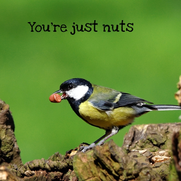 Gary Green Eyes You're just nuts  personalised online greeting card