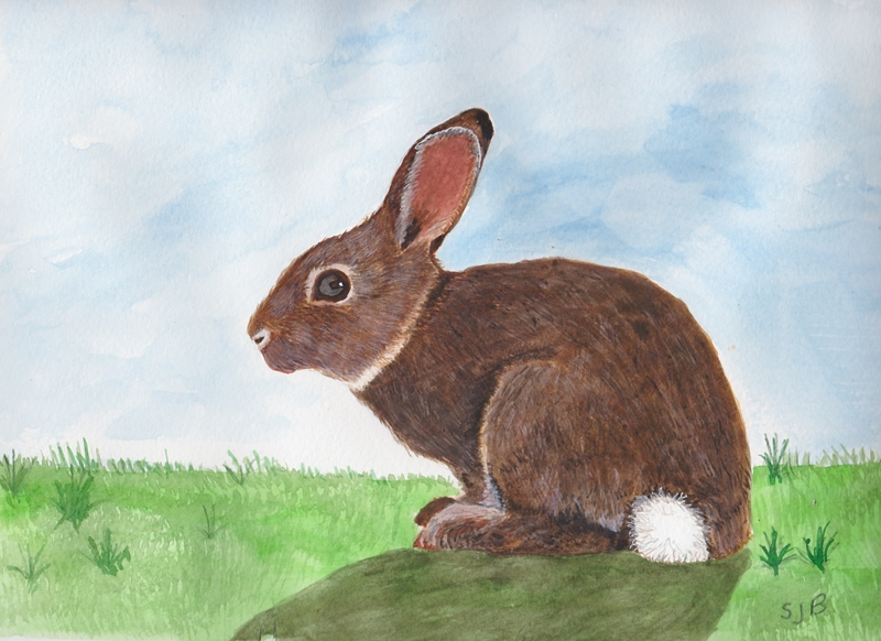 SJB Cards RABBIT  personalised online greeting card