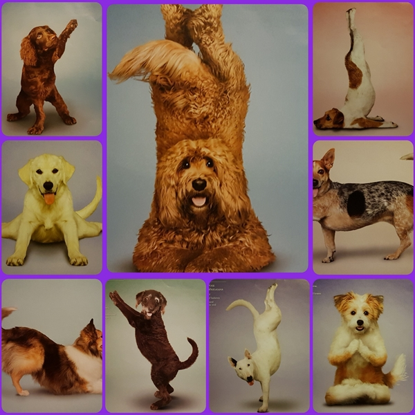 Animal welfare auctions Yoga dogs  personalised online greeting card