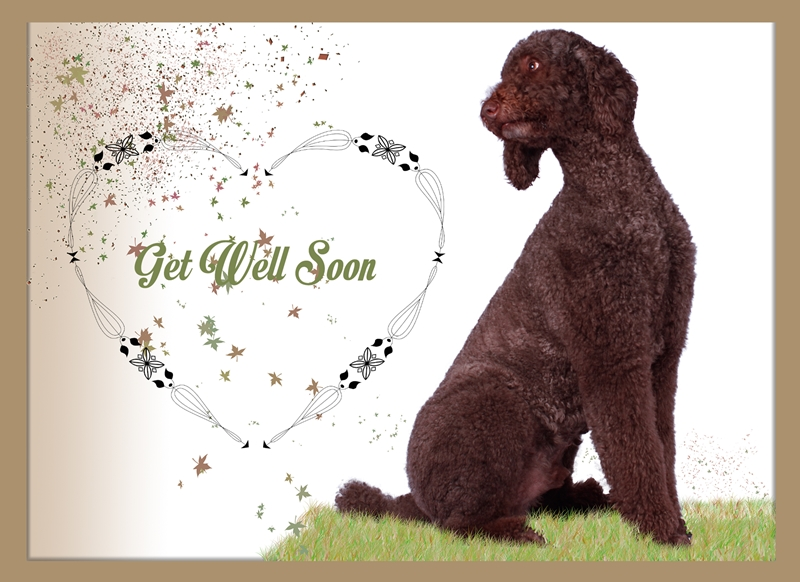 Pet Pics n Portraits Get Well  personalised online greeting card