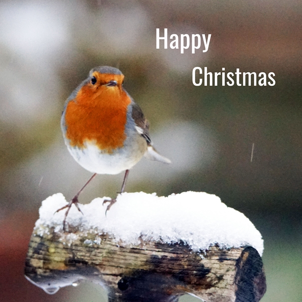 Gary Green Eyes Front facing Robin Happy Christmas  personalised online greeting card