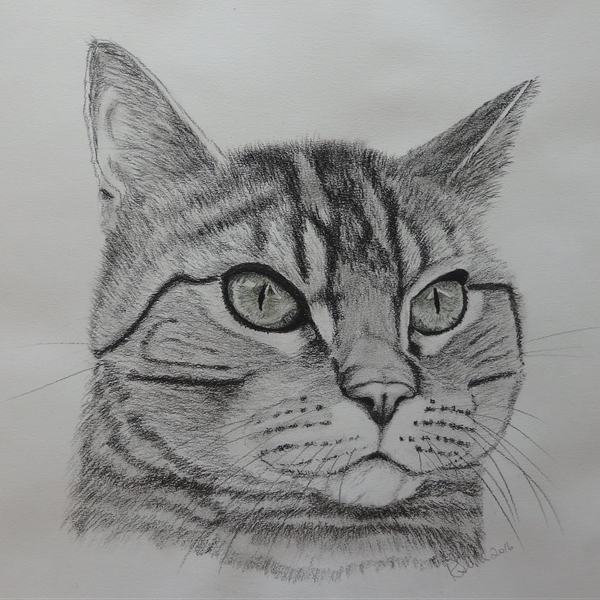 Ruth Searle Art & Photography Mr Tabby  personalised online greeting card