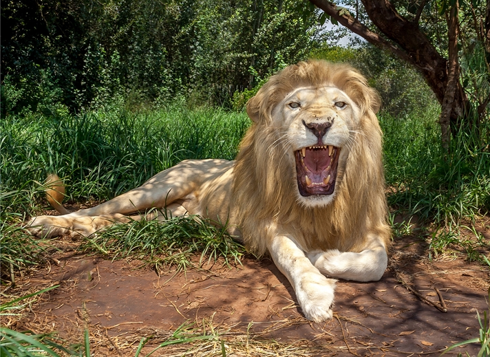 Helen Jobson Photographer White Lion  personalised online greeting card