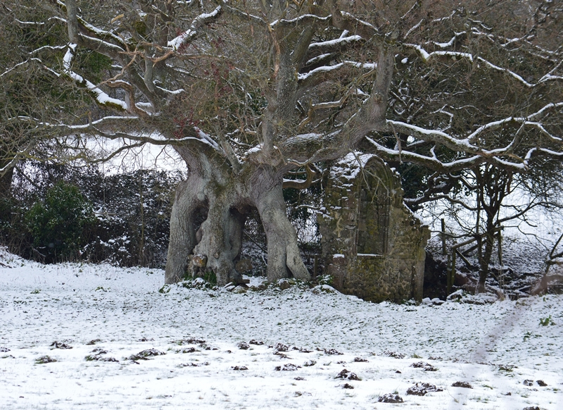 Wight Life Images Quarr ruins in snow  personalised online greeting card