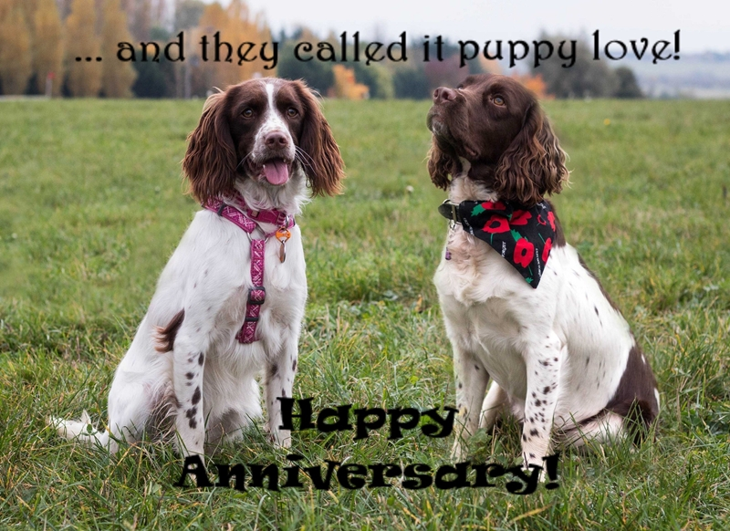 SARR Fundraising Cards Puppy Love Anniversary  personalised online greeting card