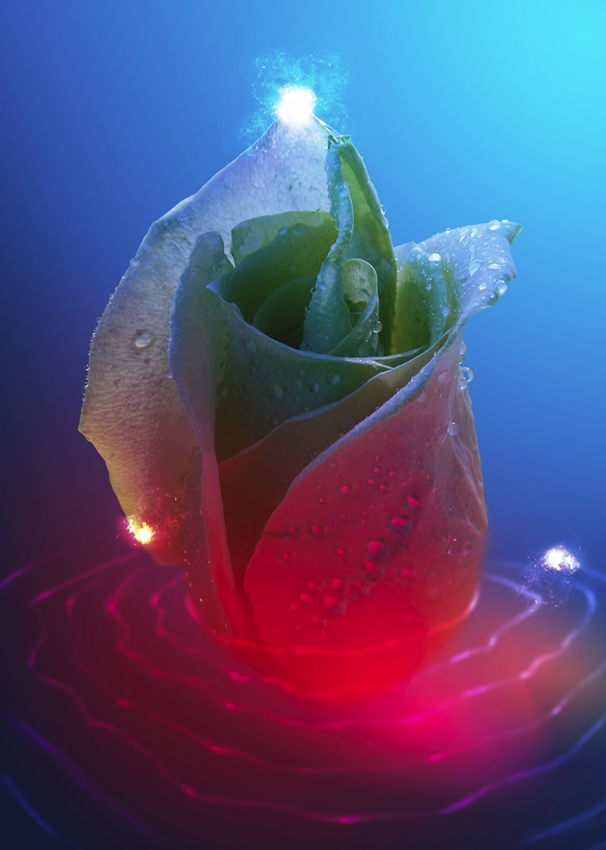 Miyasia Rippling Rose and Lights  personalised online greeting card