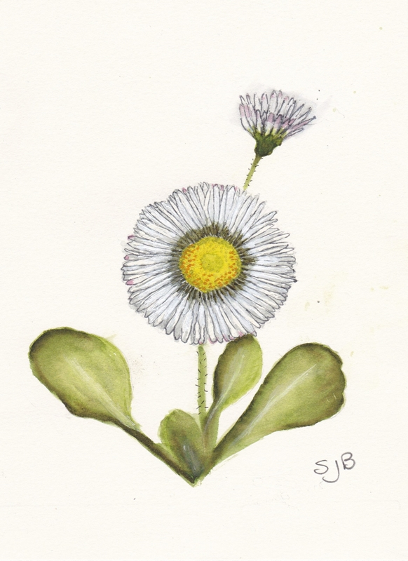 SJB Cards Daisies  personalised online greeting card