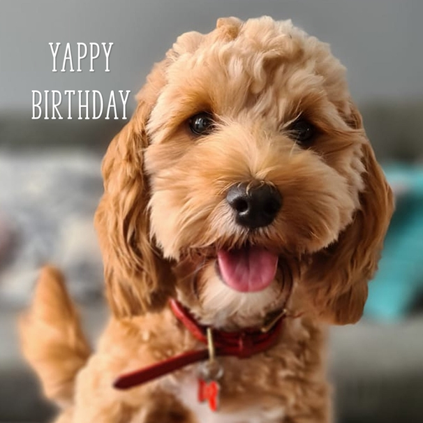 Snappy Designz Yappy Birthday  personalised online greeting card