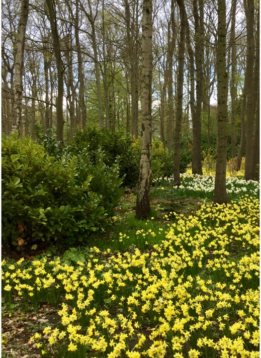 Art by Sheila O'Brien Woodland in Spring  personalised online greeting card