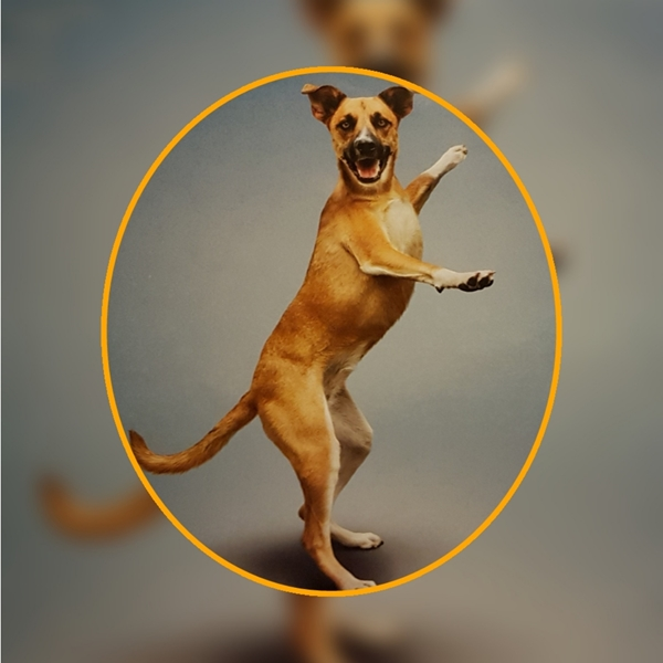 Animal welfare auctions Yoga dog  personalised online greeting card