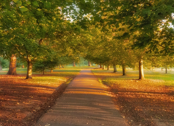 Kate Jaconello Autumn Path  personalised online greeting card