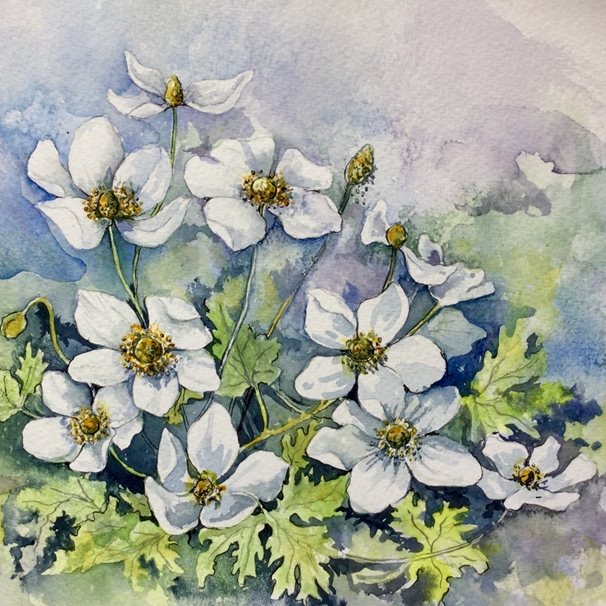 Art by Sheila O'Brien Anemones  personalised online greeting card