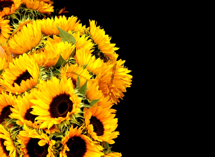 Carole Irving Art and Photography Sunflowers  personalised online greeting card