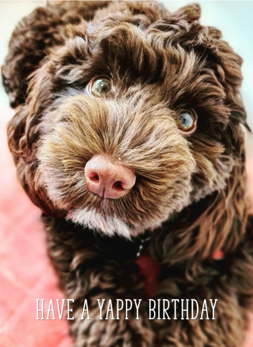 Snappy Designz Cute Puppy Notelet Card  personalised online greeting card
