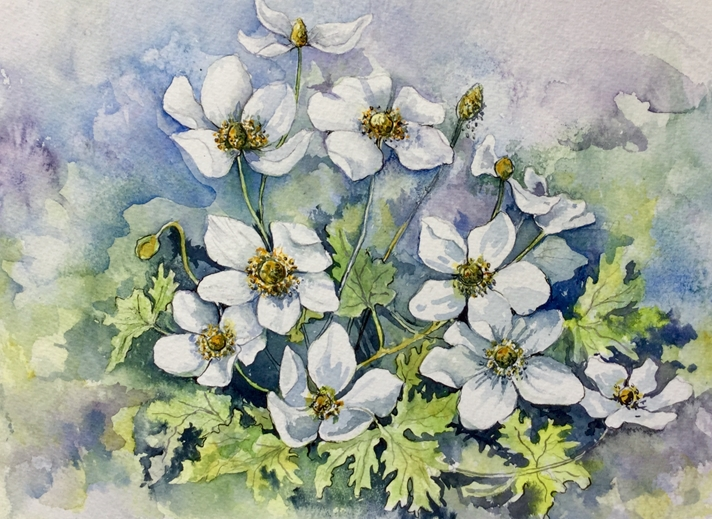 Art by Sheila O'Brien Anemone  personalised online greeting card