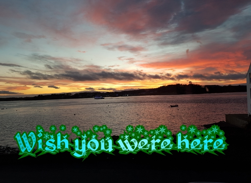 Animal welfare auctions Wish you were here  personalised online greeting card