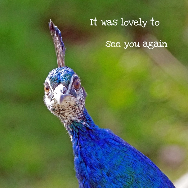 Gary Green Eyes Peacock  personalised online greeting card