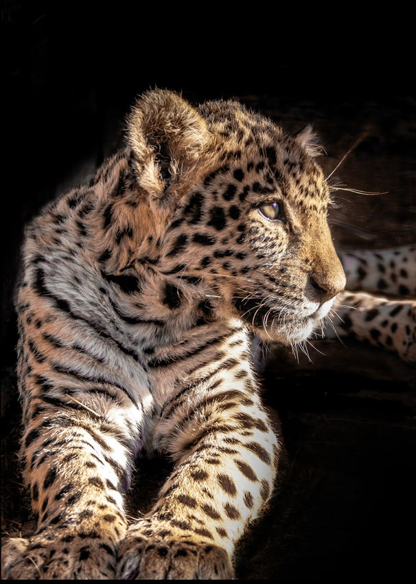 Helen Jobson Photographer Leopard Cub  personalised online greeting card