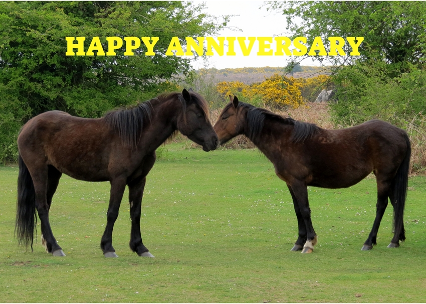 Debbie Daylights Anniversary New Forest ponies  personalised online greeting card