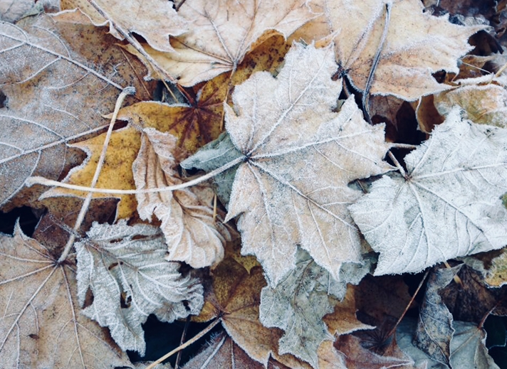 Carole Irving Art and Photography Frosty Leaves  personalised online greeting card