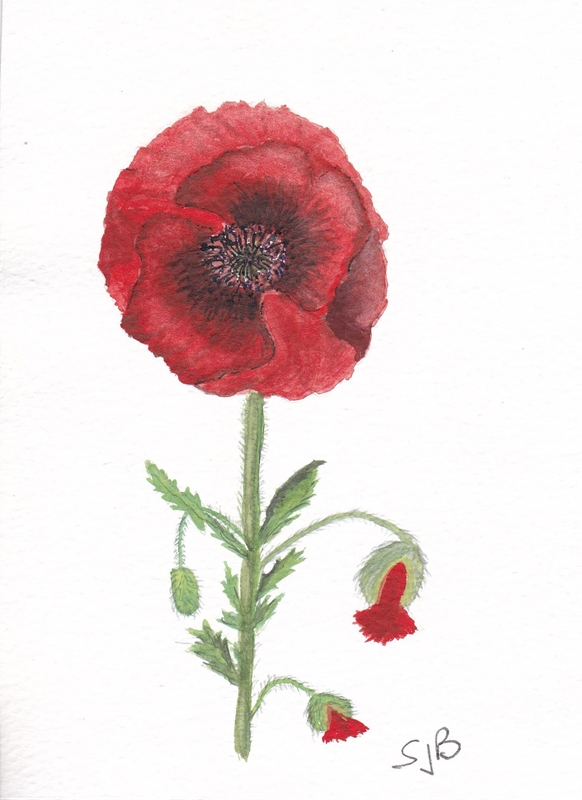 SJB Cards Single Red Poppy  personalised online greeting card