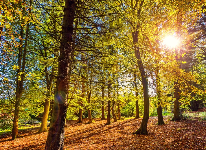 NorthLight Photo-Art Golden Woods  personalised online greeting card