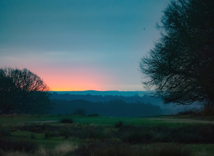 Kate Jaconello Sunrise at Richmond Park  personalised online greeting card