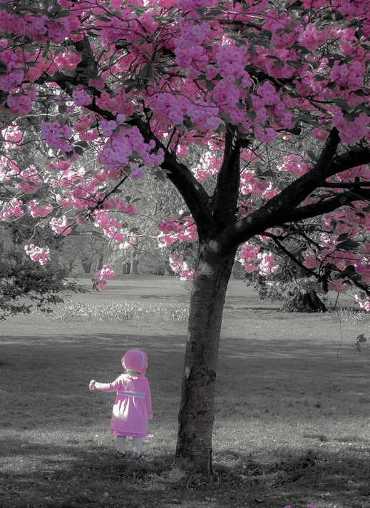 Kate Jaconello Cherry Blossom Girl  personalised online greeting card