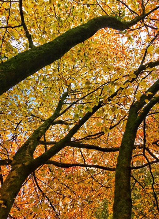 Carole Irving Art and Photography Autumn Colours  personalised online greeting card