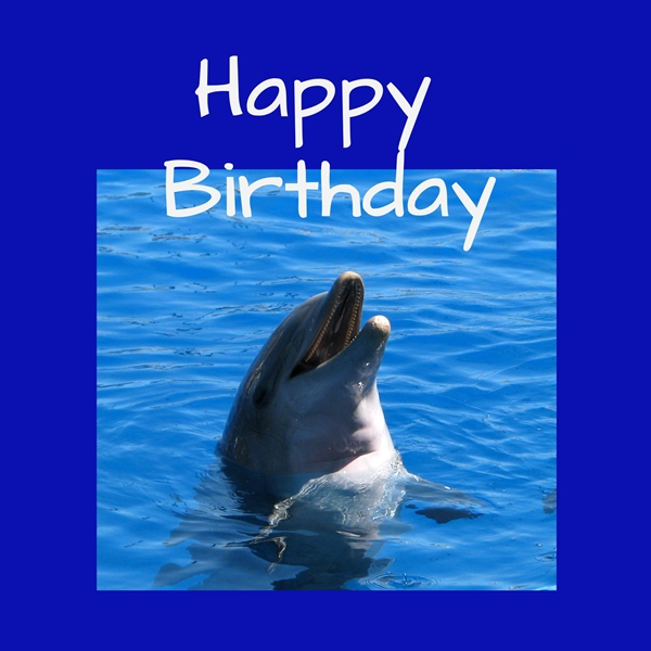 Debbie Daylights Birthday dolphin  personalised online greeting card
