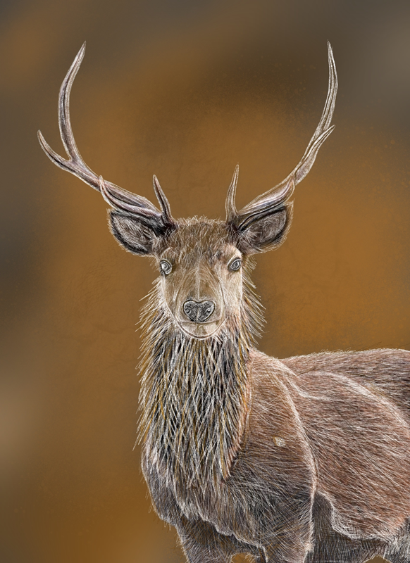 Thelesserknownartist Stag  personalised online greeting card