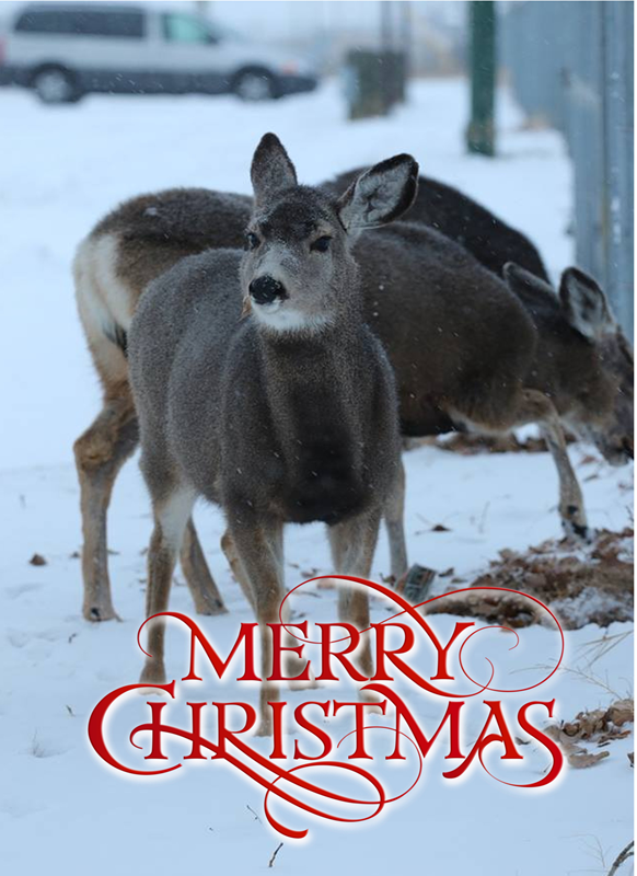Lizzy'sCardsLTD Christmas Deer  personalised online greeting card