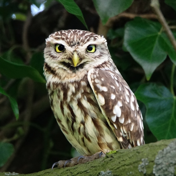 Gary Green Eyes Little Owl  personalised online greeting card