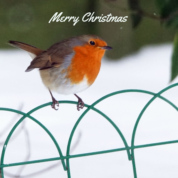 Gary Green Eyes Christmas Robin on a fence in the snow  personalised online greeting card